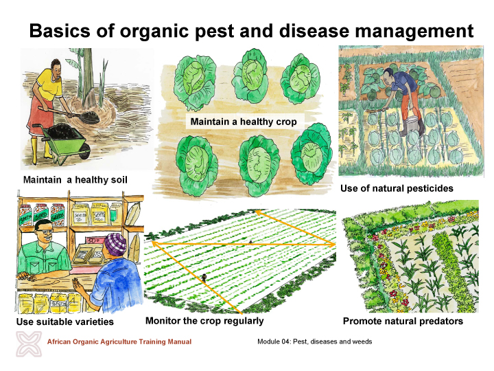 Pictures of basics of organic pest and disease management
